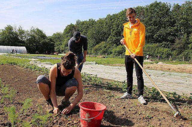 UW/H-Studierende beim Gemüseanbau