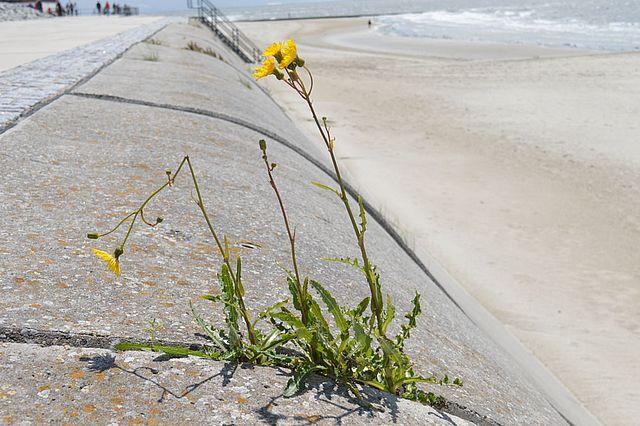 Initiative Resilienz - Pflanze, die unter widrigen Umständen wächst